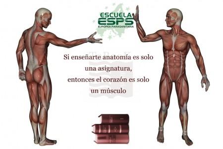 Curso anatomía para terapias naturales