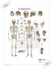 "Poster gigante ""El Esqueleto"""